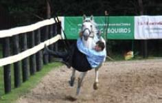 Пролаз под шеей коня